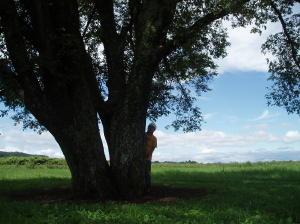 この木がどこにあるかわかるあなたはマニア☆